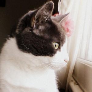 Wololox's Profile Picture