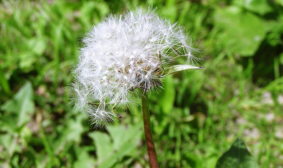 fading like a flower by agnieszka-b