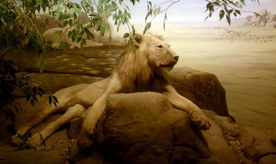 Surprise Stock: Lion by SenshiStock