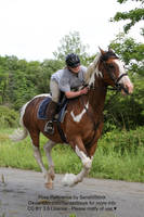 Horse and Rider Gallop Pose Reference