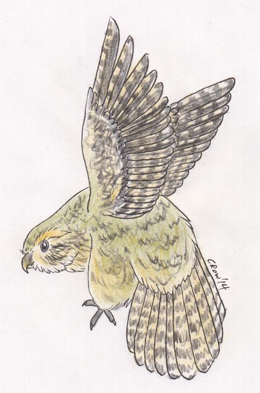 Kakapo by Crowspeaker