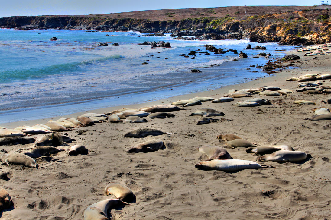 Elephant Seal Beach by zootnik