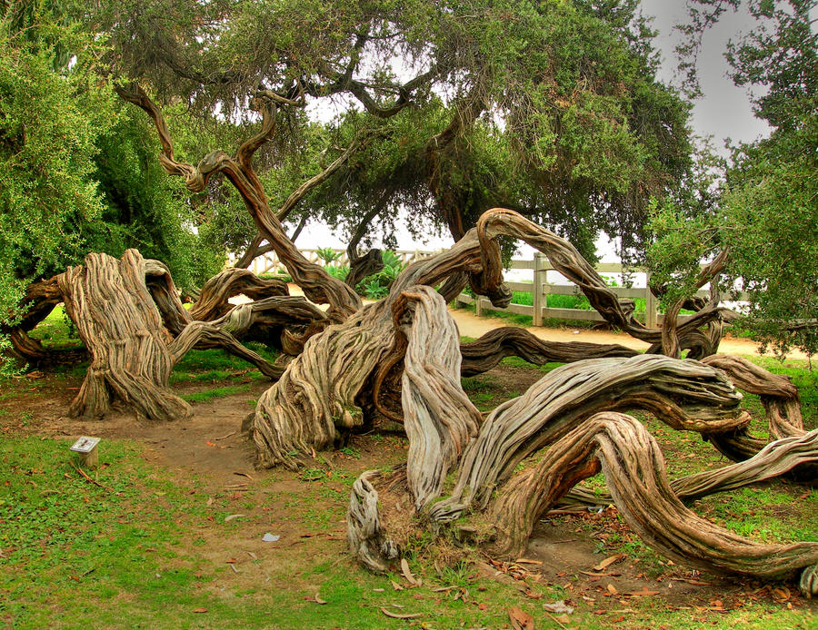 Gnarled by zootnik