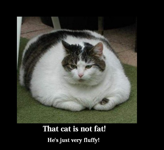 hilarious pictures of fat cats - photo #10