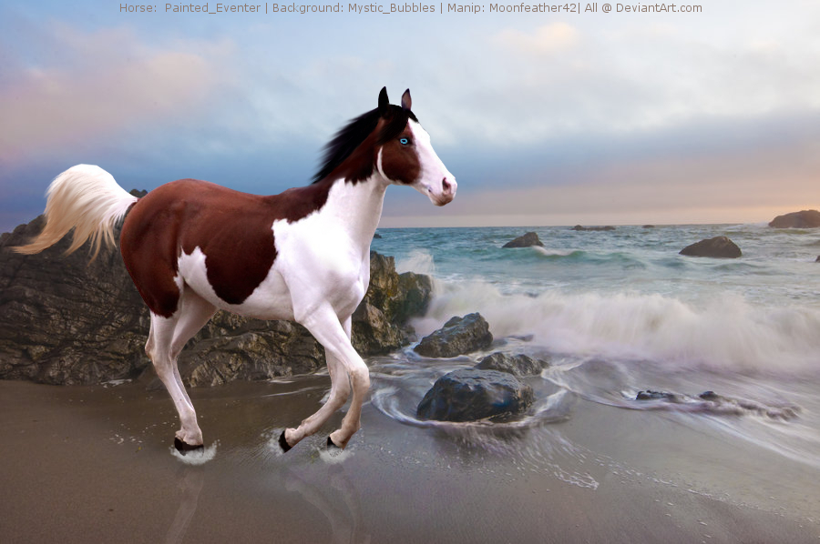 Picture suggestion for Wild Paint Horse Pictures