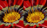 Blumi close - stereoscopic 3D