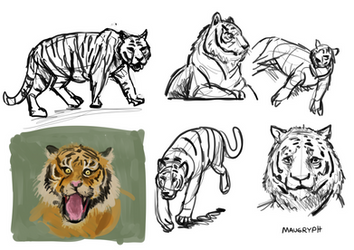 Tiger doodles (D36)