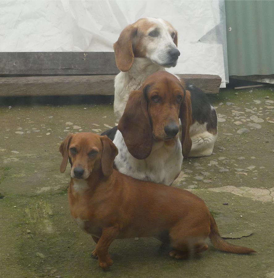 Trio canino by Annemarie1996