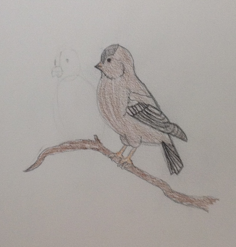 bird drawing by GwenGotGame