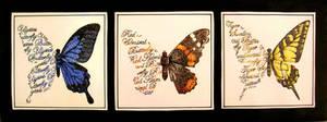 Butterflies by ctrl-alt-delete