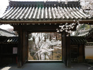 Spring in a Japanese Temple
