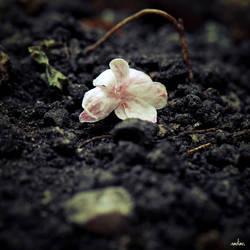 Fallen Jasmine by azhurian