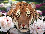 The tiger in the peonies
