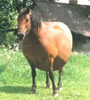Rain, Jeff's horse by Neos429