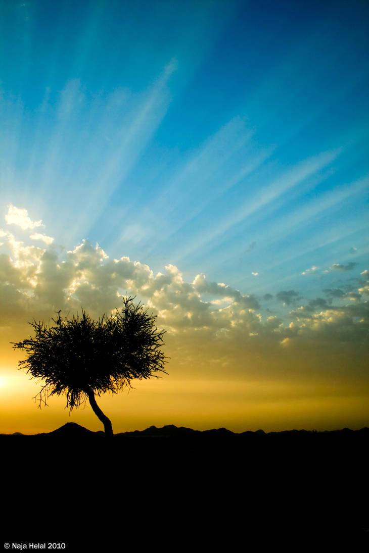 Tree Silhouettes by eyesweb1