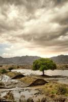 Tree Rain by eyesweb1