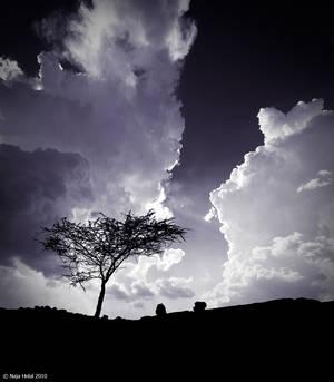 Tree hell