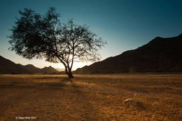 Memories tree by eyesweb1