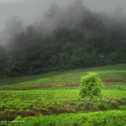 Tree Fog by eyesweb1