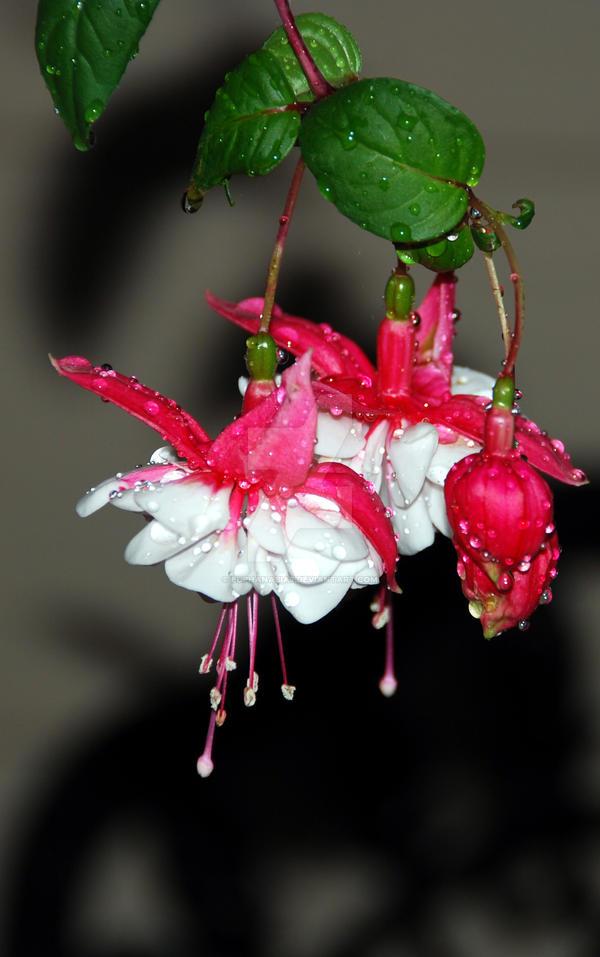 Dripping Wet By Euphanasia7 On Deviantart-2687