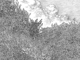 leaves of grass by STRIB0G