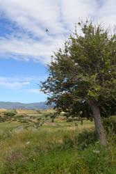 Italien Reise - Sardinien Landschaft Baum by MoondragonEismond