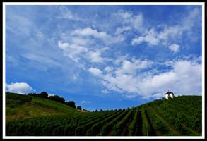 German Vineyards by Jeeemie