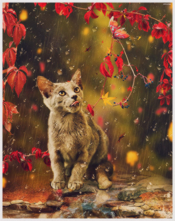 cat in autumn by ViktoriyaDr