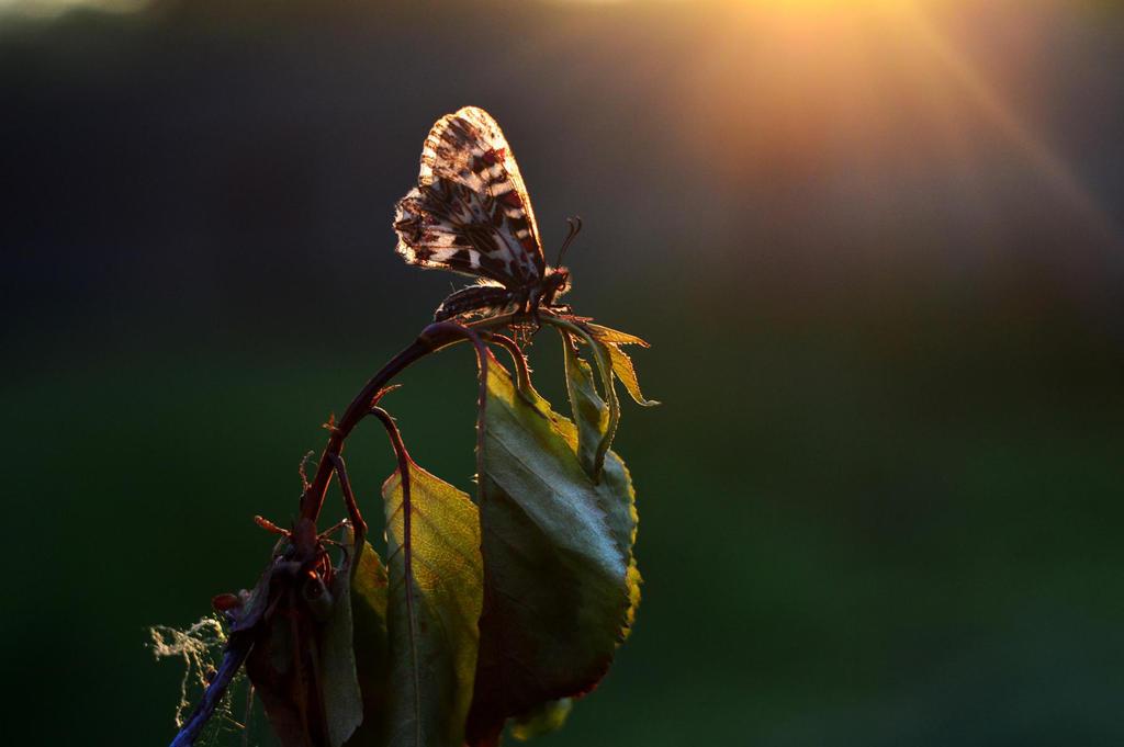 the sun sets by ViktoriyaDr