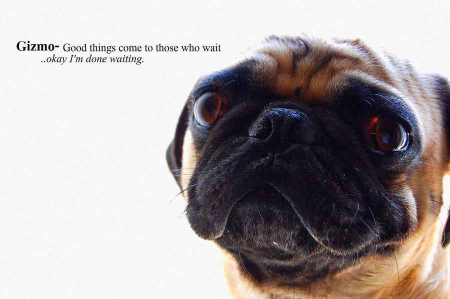 The Waiting Pug