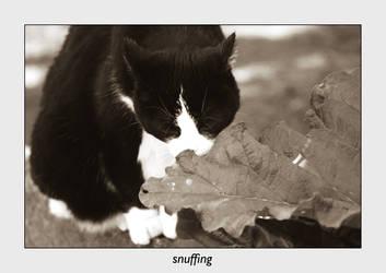 snuffling by maulwurf