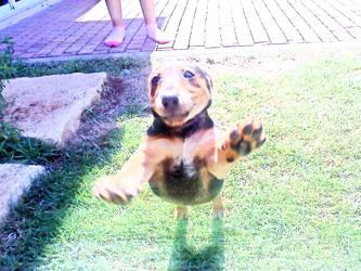 cutie dog capture :D by HealTheIll