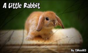 A Little Rabbit by 13Booob13