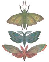 Saturn Moths