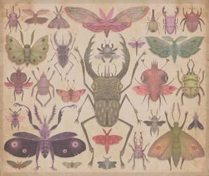 Entomologist's Wish