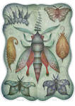 Entomology Tab. II
