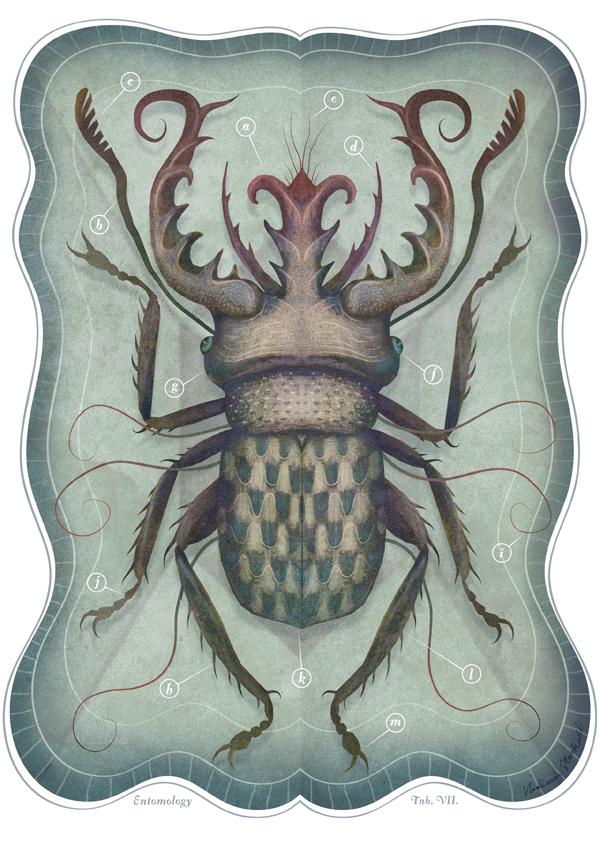 Entomology Tab. VII by V-L-A-D-I-M-I-R