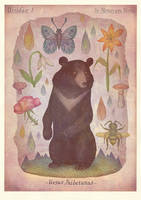 Asian black bear by V-L-A-D-I-M-I-R