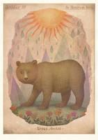 Brown bear by V-L-A-D-I-M-I-R