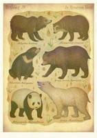Bears by V-L-A-D-I-M-I-R