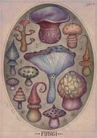 Fungi II by V-L-A-D-I-M-I-R