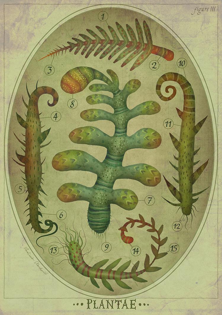 Plantae III by V-L-A-D-I-M-I-R
