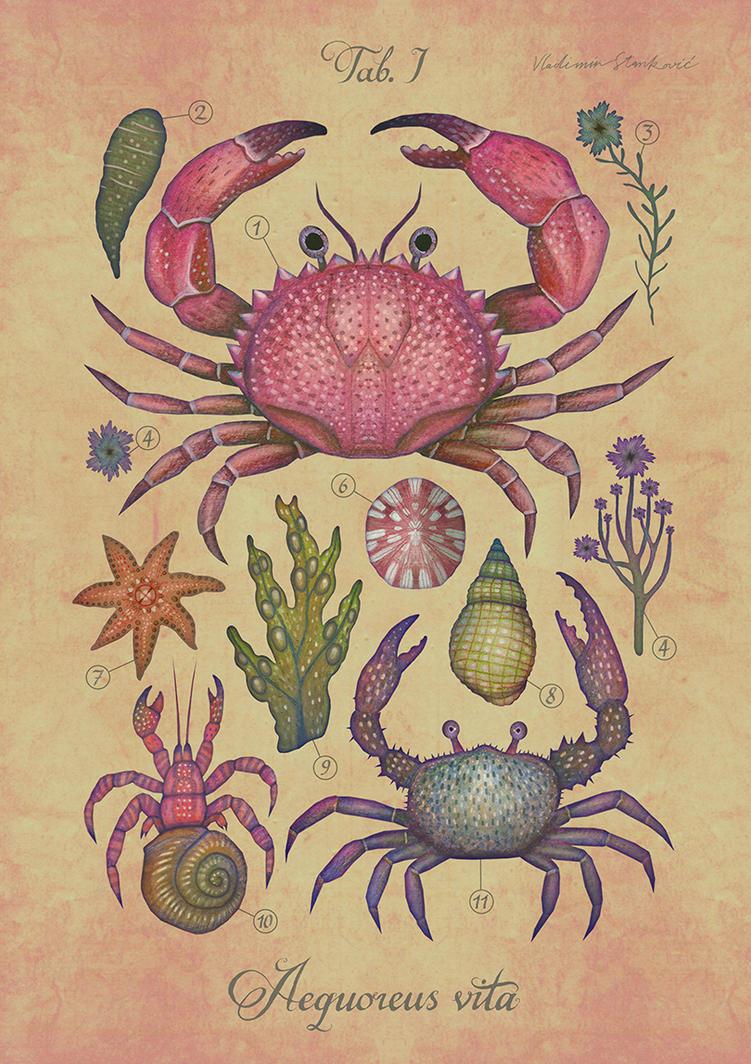 Aequoreus vita I / Marine life I by V-L-A-D-I-M-I-R
