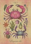 Aequoreus vita I / Marine life I