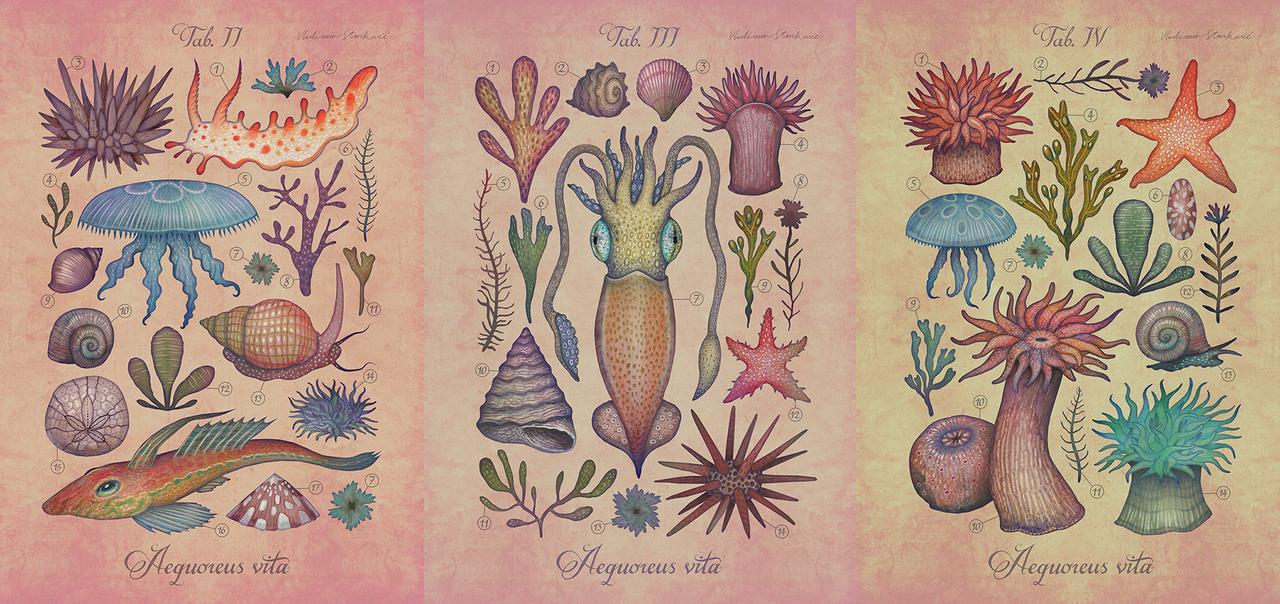 Aequoreus vita / Marine life by V-L-A-D-I-M-I-R