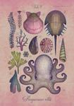 Aequoreus vita V / Marine life V
