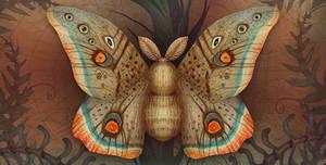 Saturnia Moth