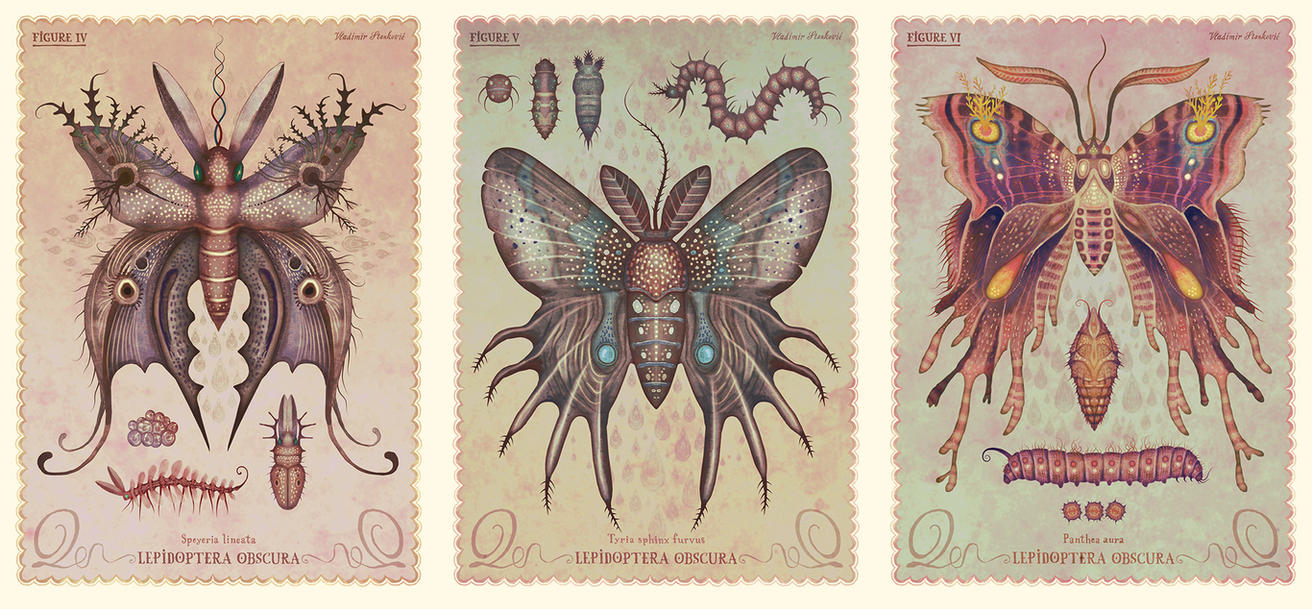 Lepidoptera obscura species II by V-L-A-D-I-M-I-R