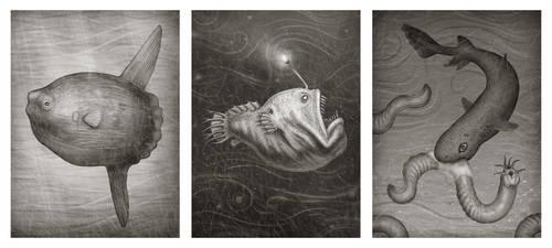Ocean Sunfish, Anglerfish and Hagfish