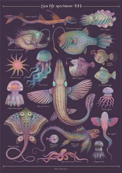 Sea Specimens III